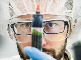 bacteria and organic electronics