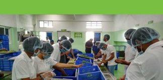 Micron Employees volunteering