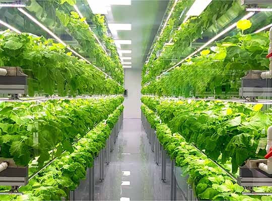 Cloud for Horticulture and Indoor Cultivation